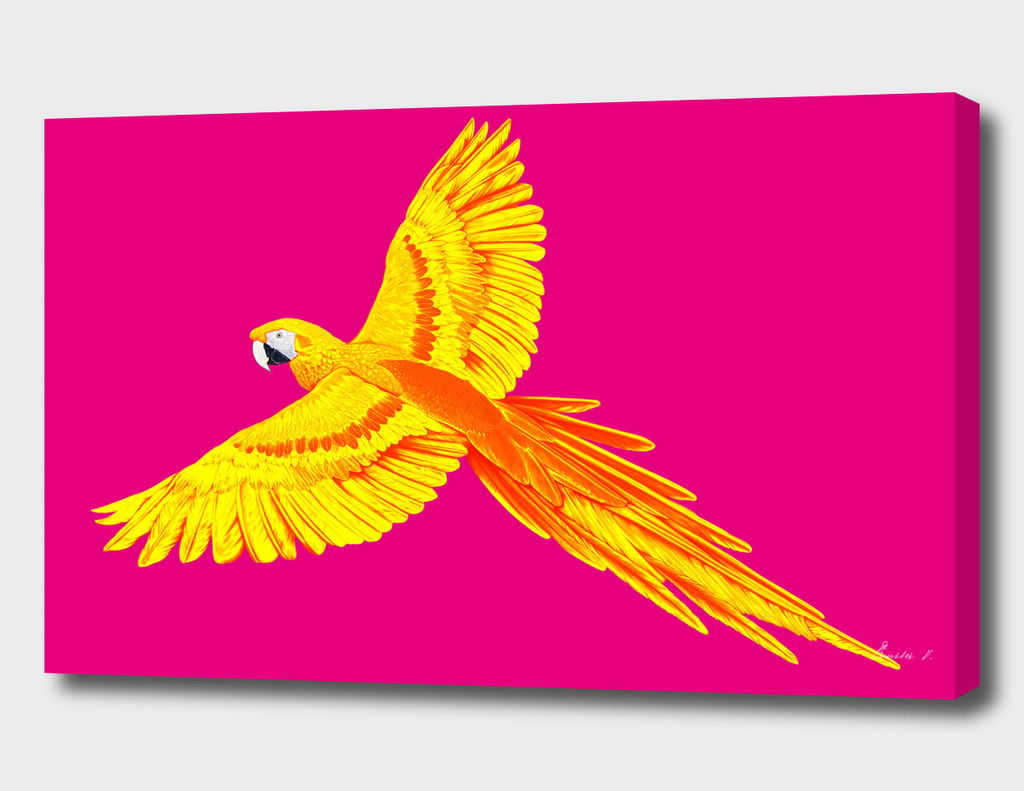 Golden Parrot