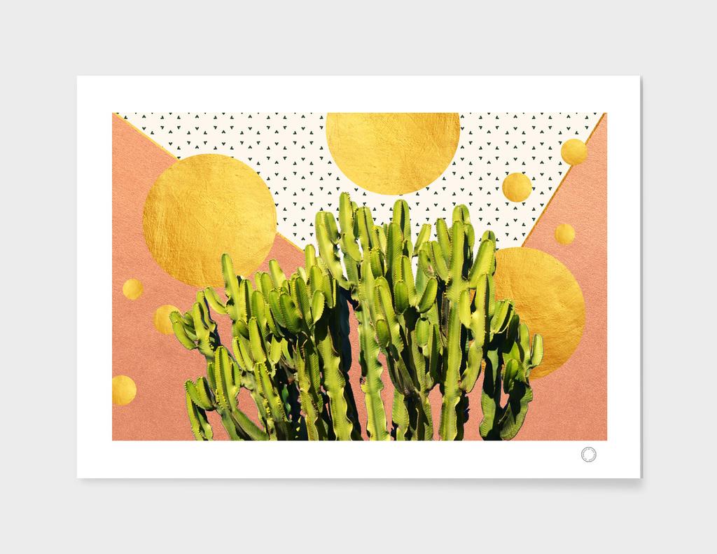 Cactus Dream