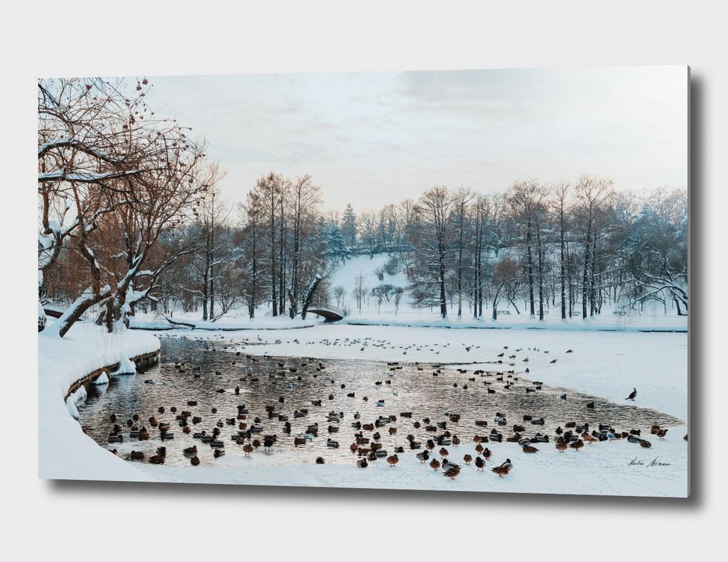 Ducks And Seagull Birds On Frozen Lake In Winter