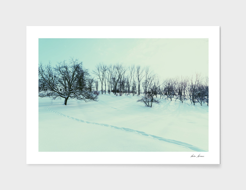 Winter Landscape With Snow And Trees After Blizzard