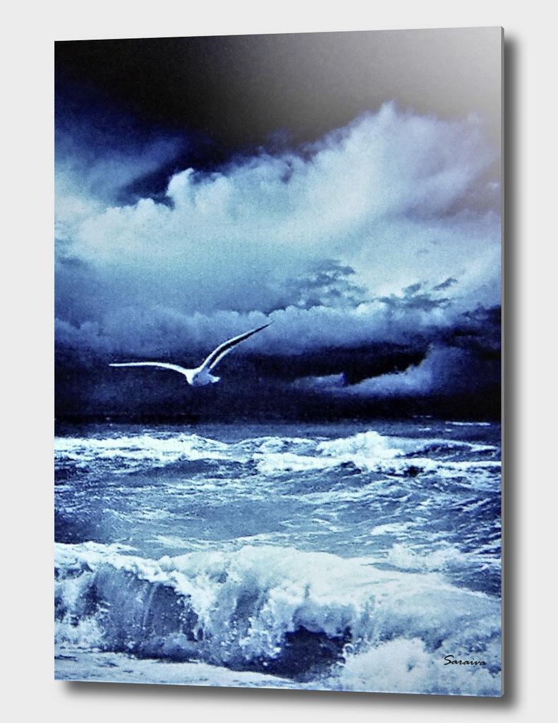 Seagulls ashore