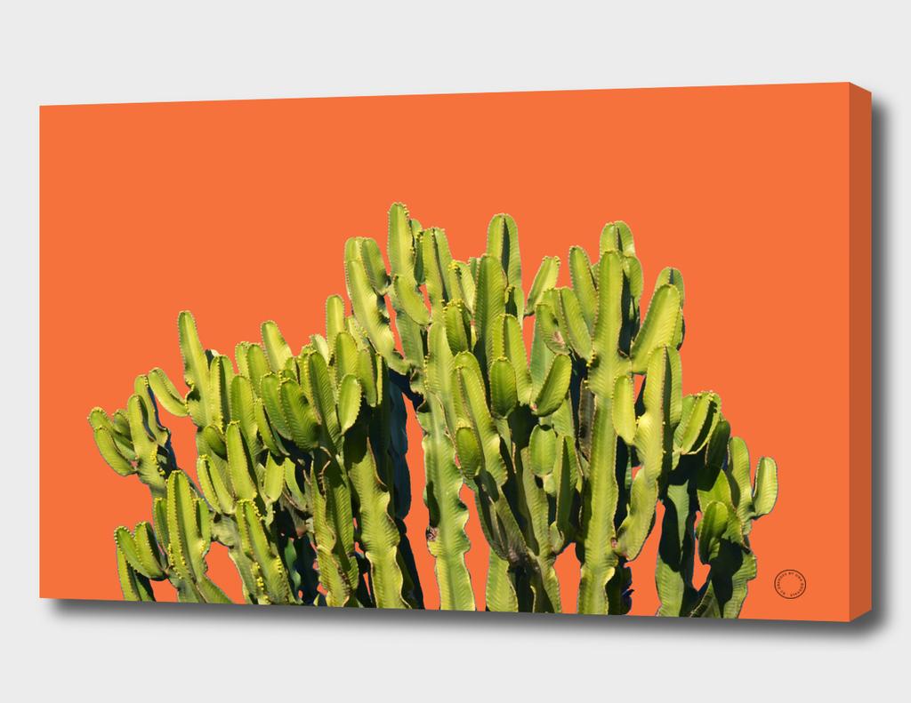 Bold Cactus
