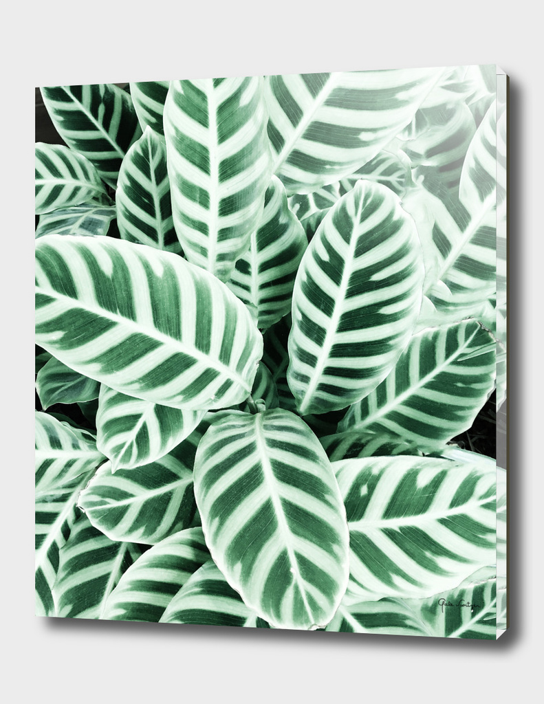 Wild leaf