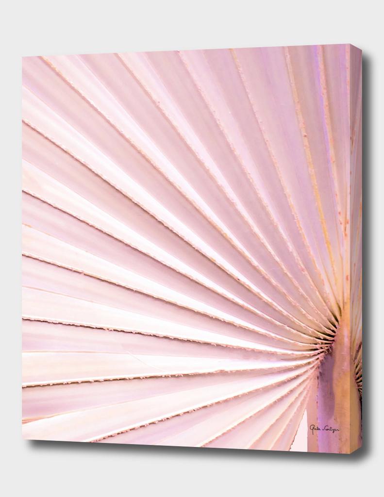 Fan palm - pink