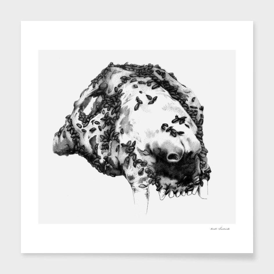 Dermestid Beetles on Lion Skull