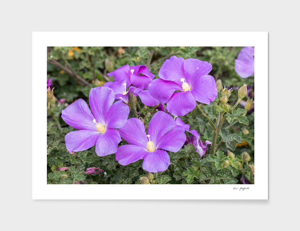 Purple Flowers 162 8629