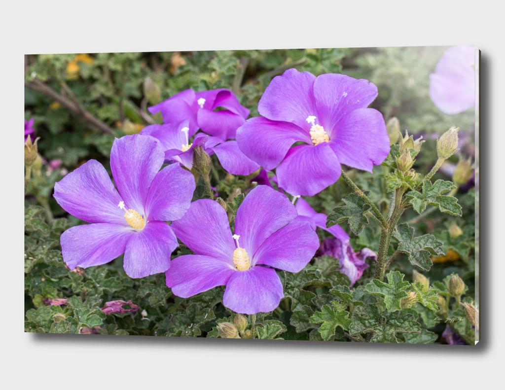 Purple Flowers 162 8629