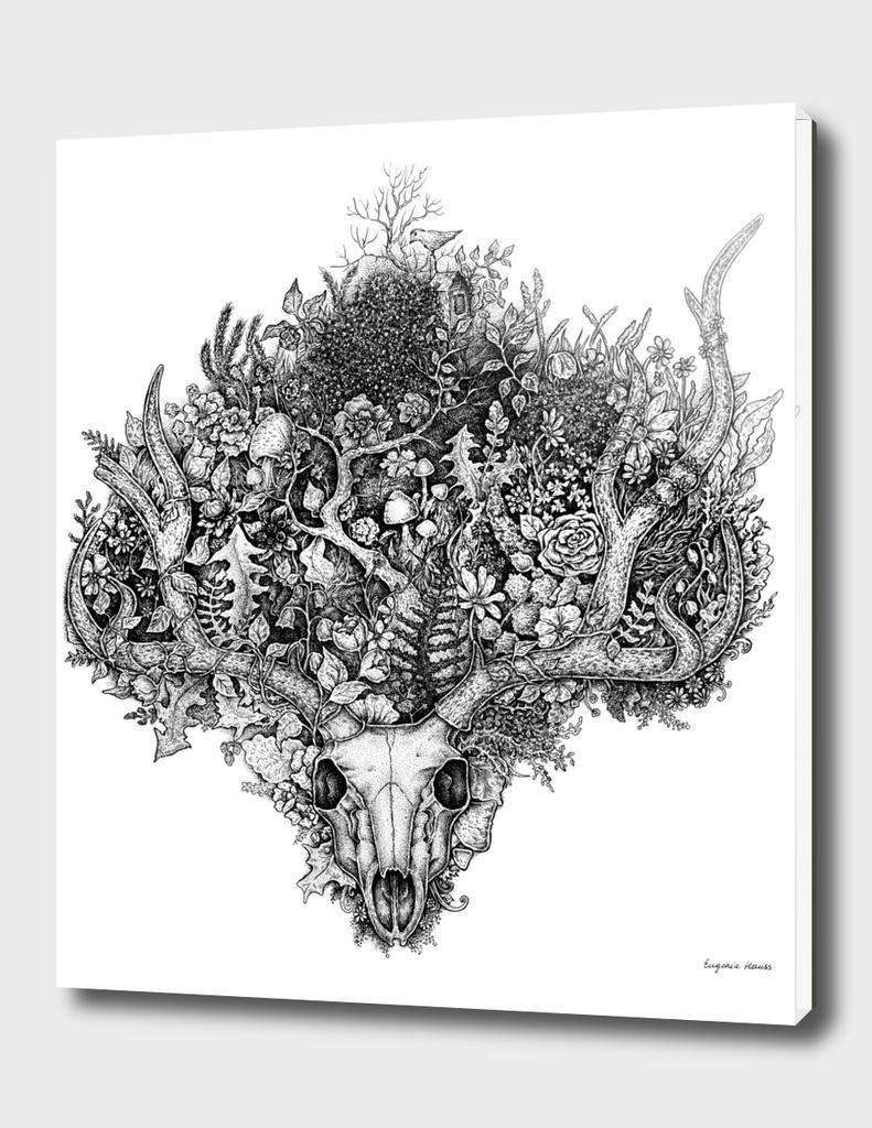 Life's Mystery: Deer Skull