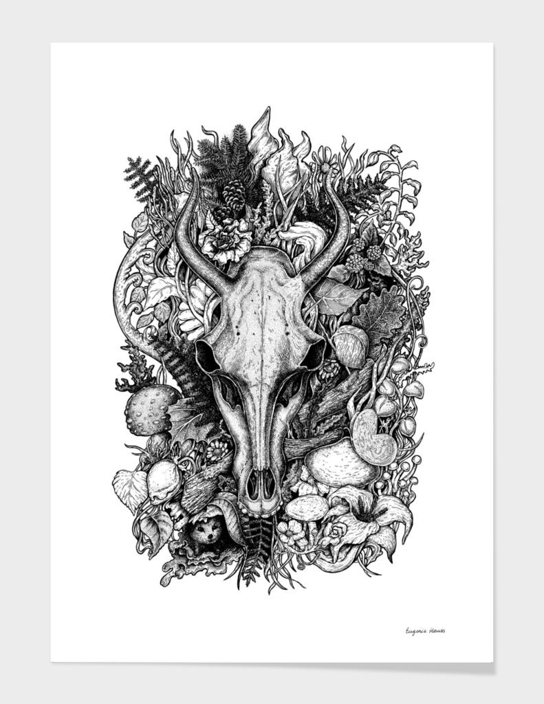 Life's Mystery: Goat Skull
