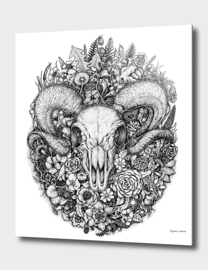 Life's Mystery: Ram Skull