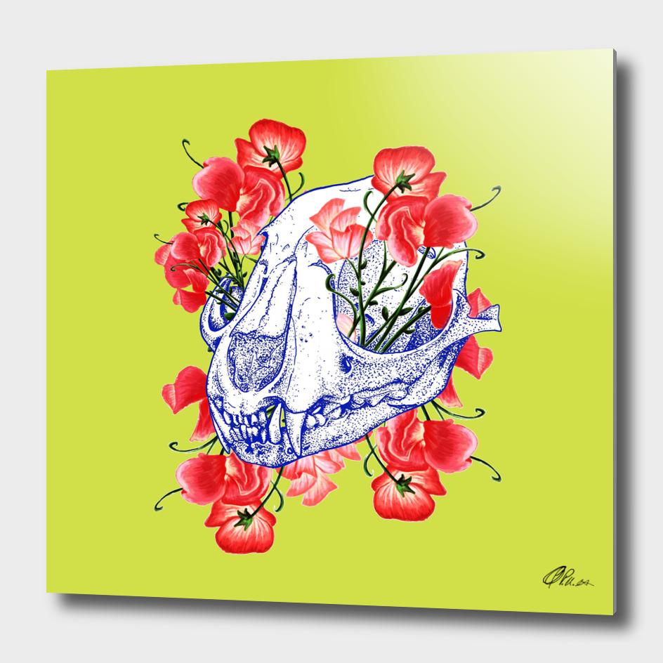 Sheep Skull in poppies