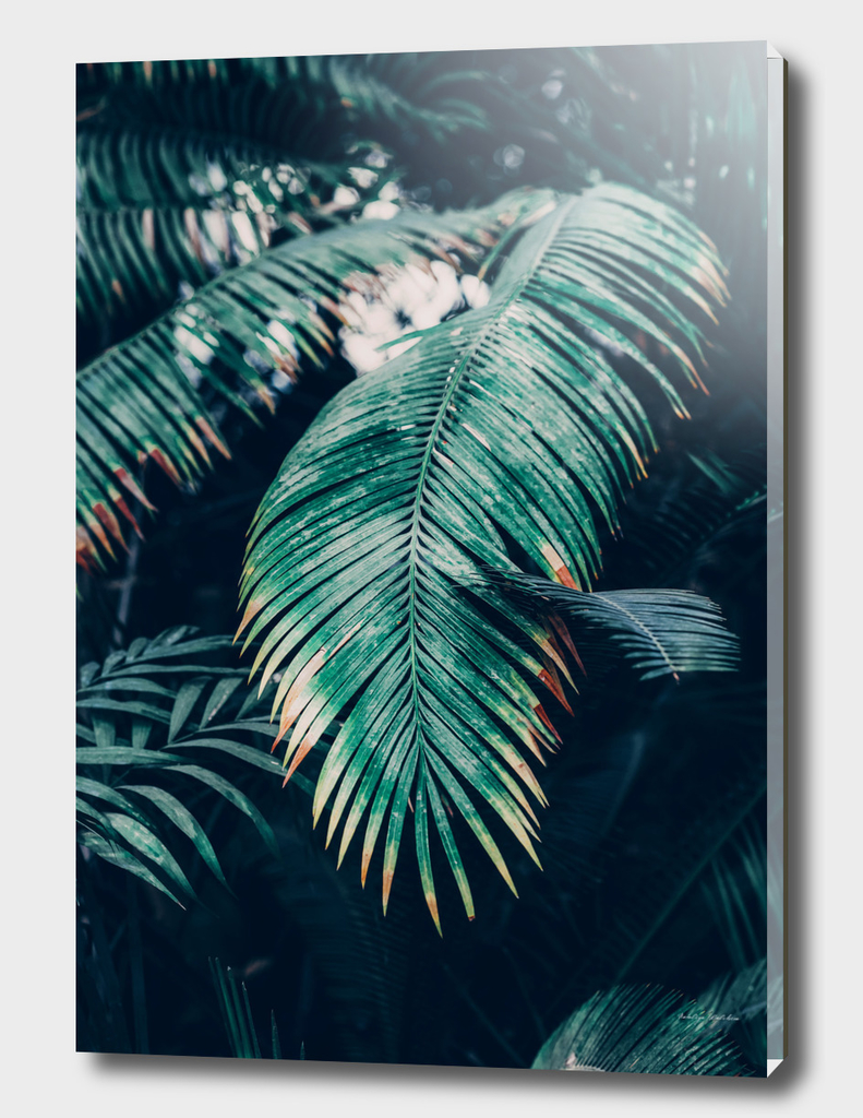 Tropical Palm Leaf