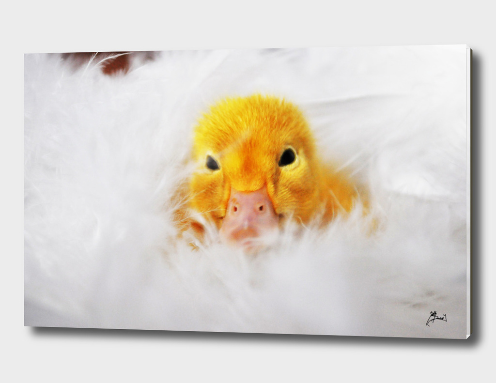 lil sleepy duck