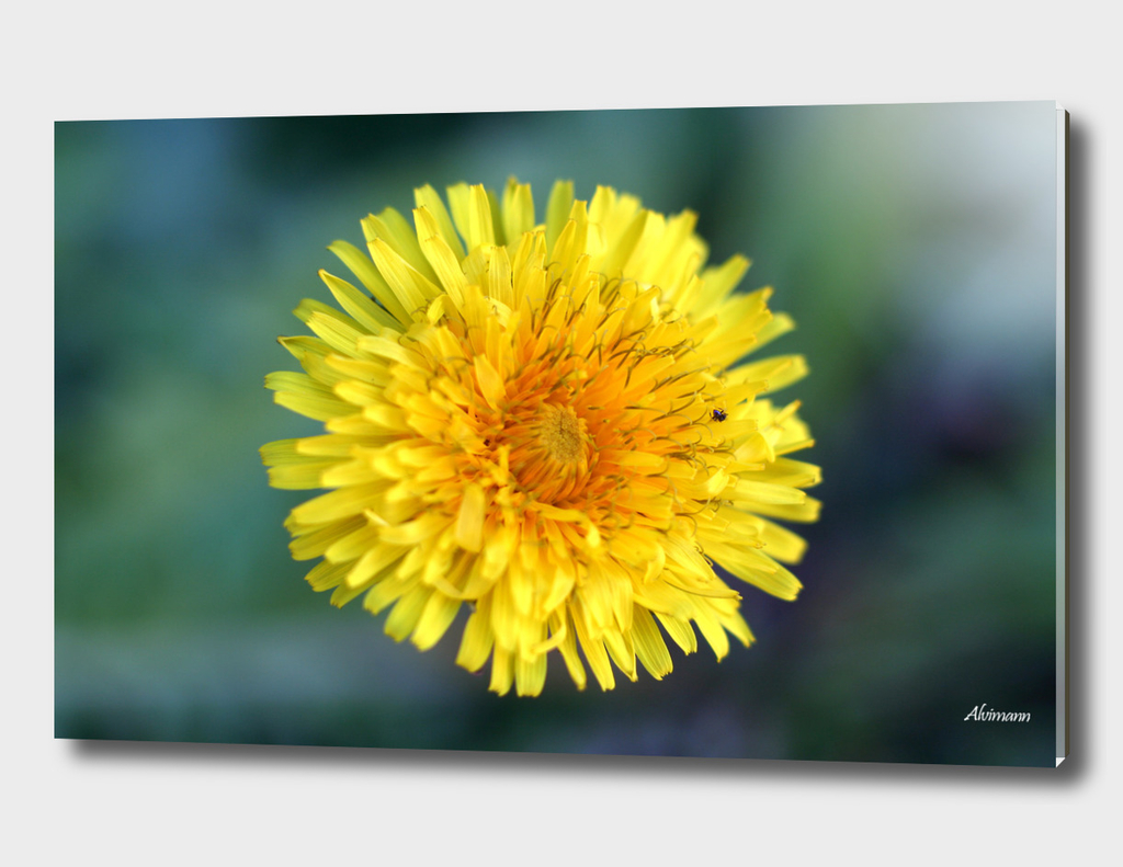 Yellow Grass Flower