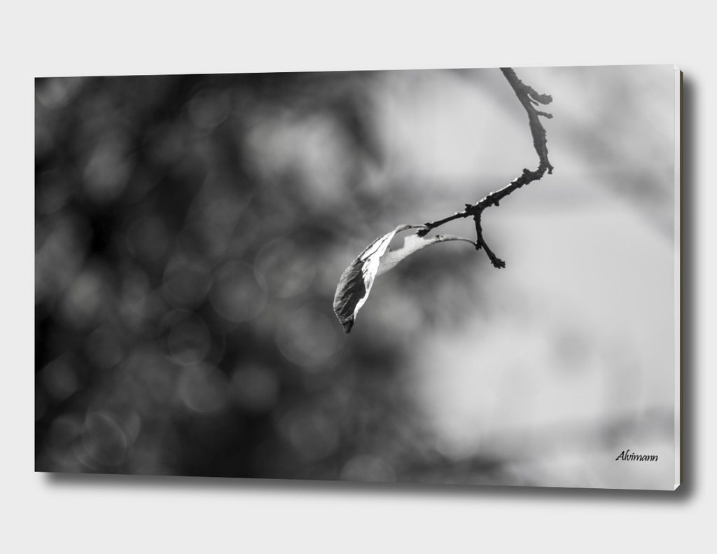 Bokeh Leaves in B&W