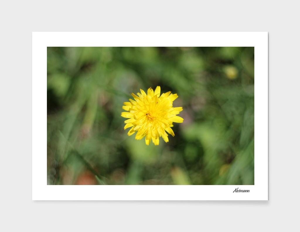 Yellow Grass Flower