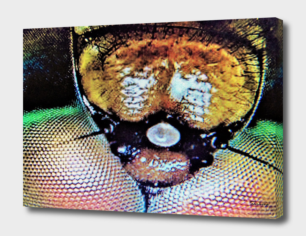 Insect head