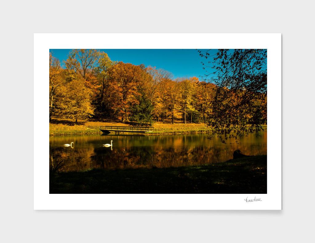 AutumnSwan