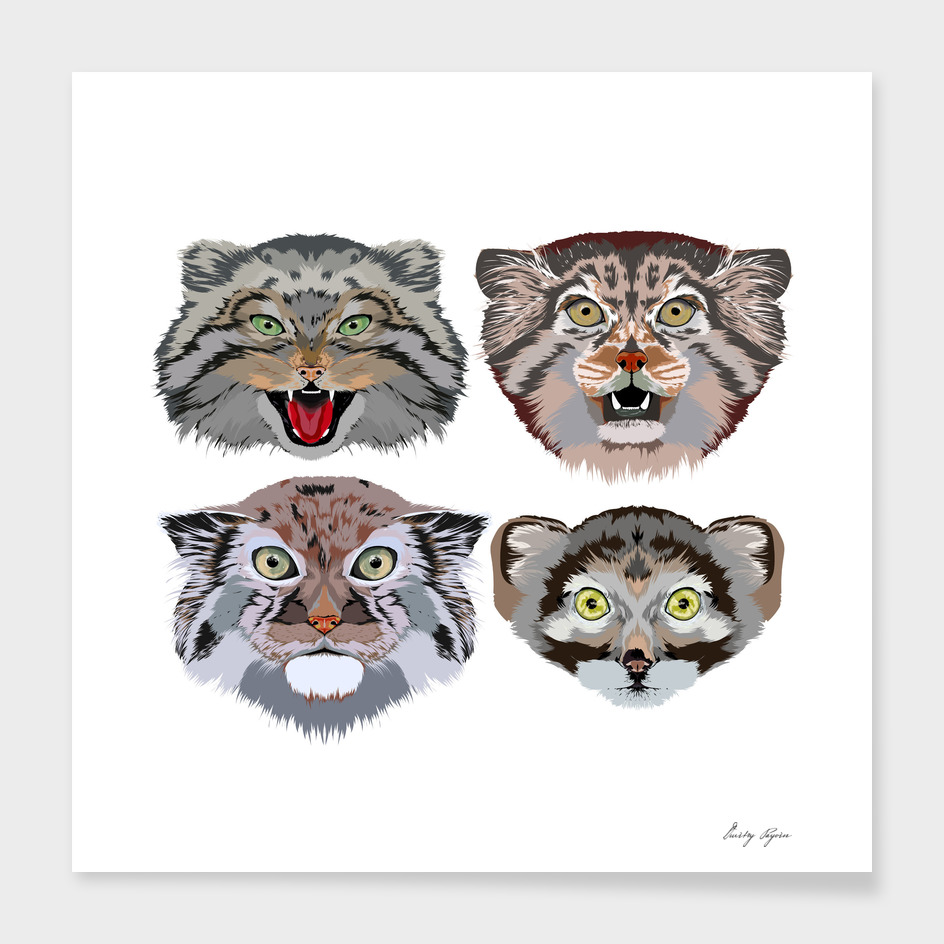 Pallas cat (Otocolobus manul) portrait hand drawing s