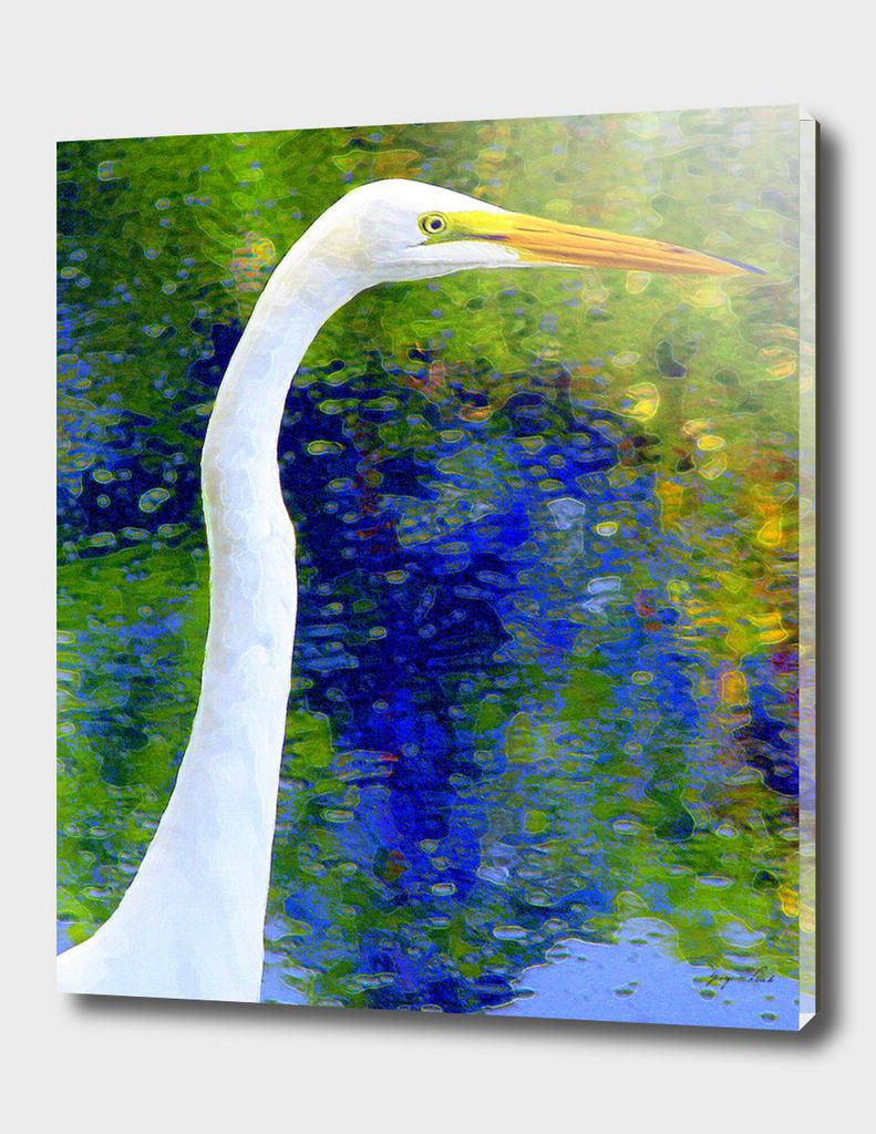 American White Egret