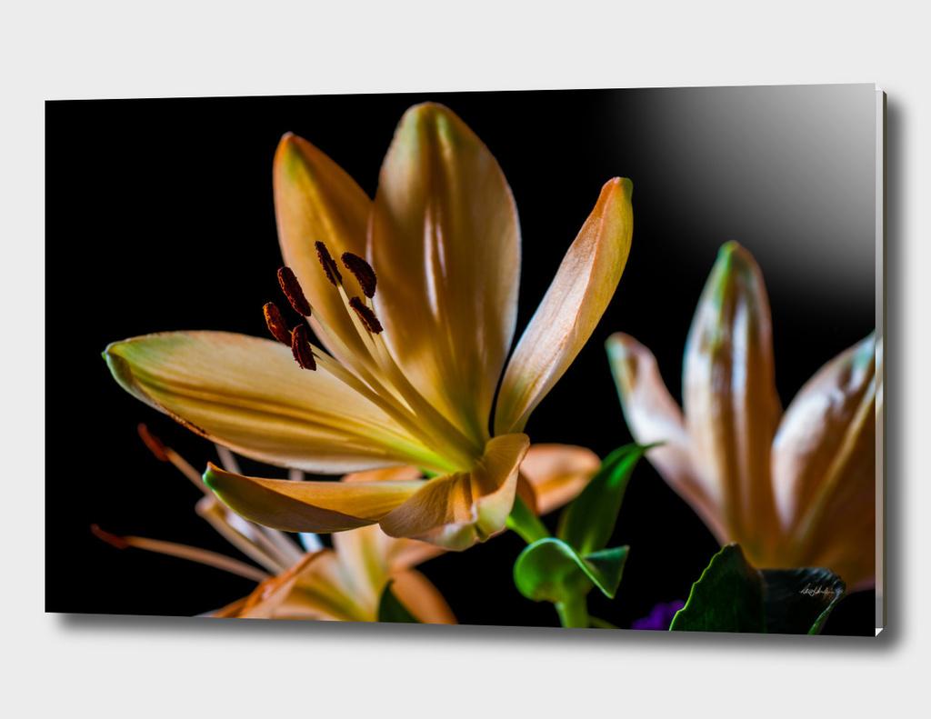 Pistils and Petals