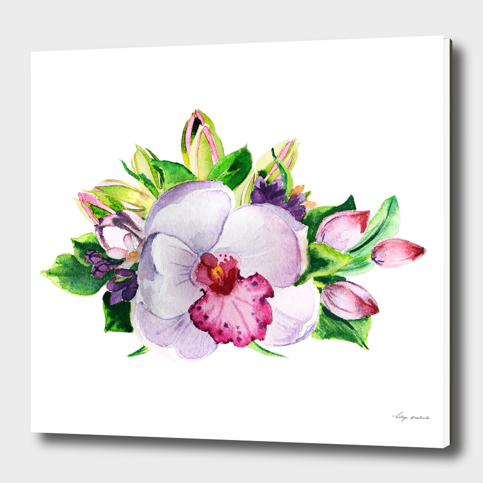 watercolor orchid flower
