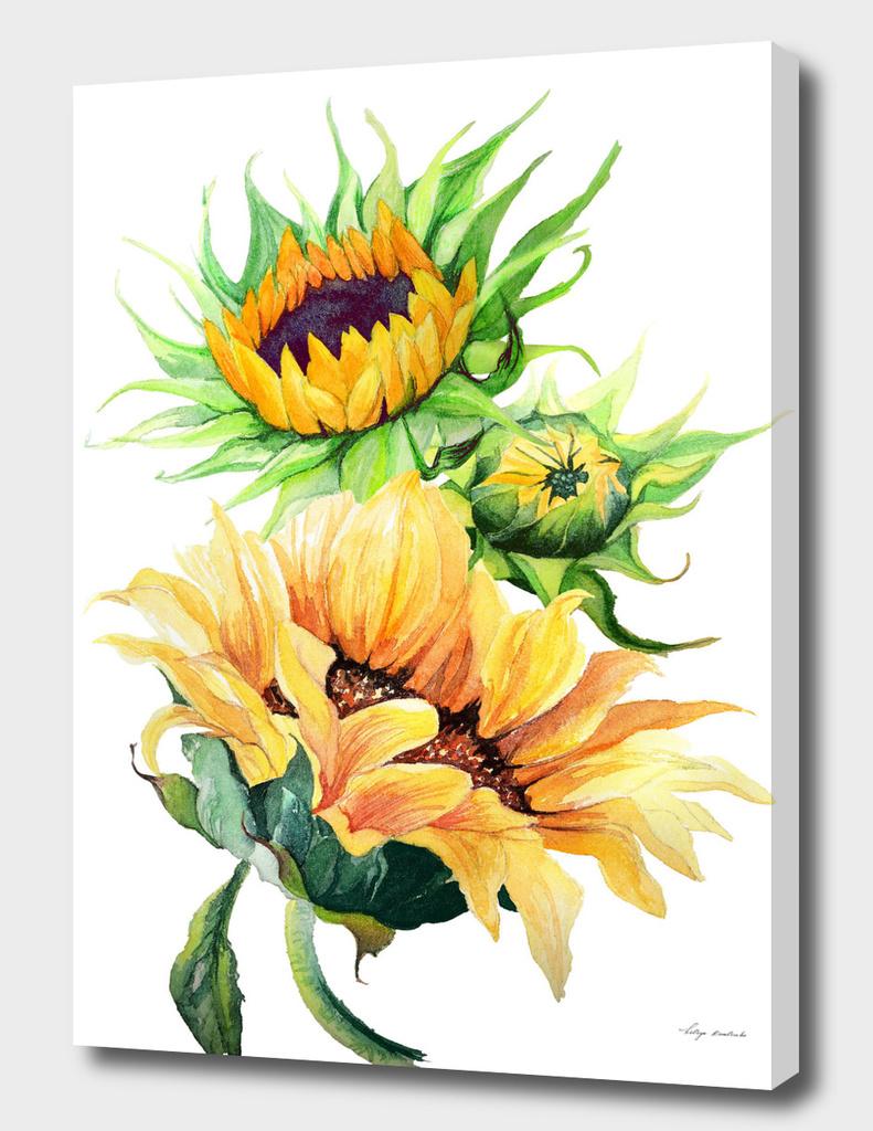flowers sunflowers