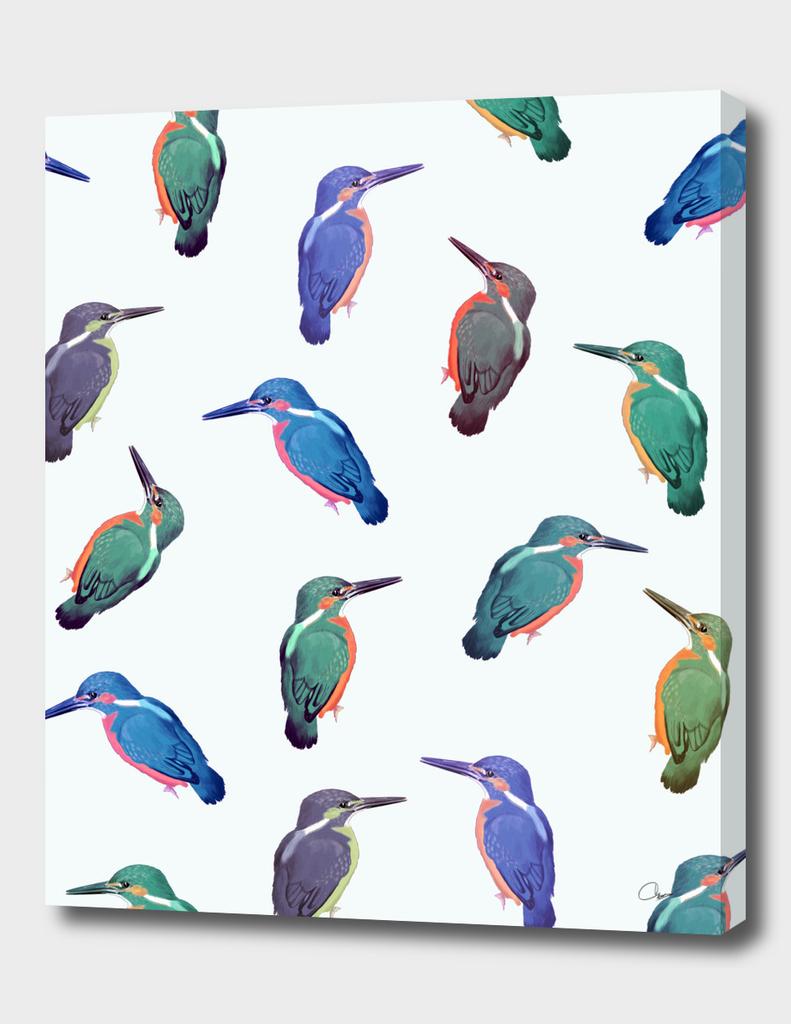 Colored-Kingfishers