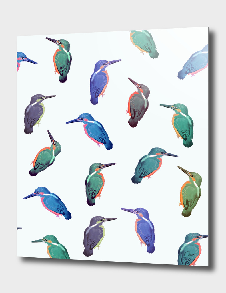 Colored-Kingfishers