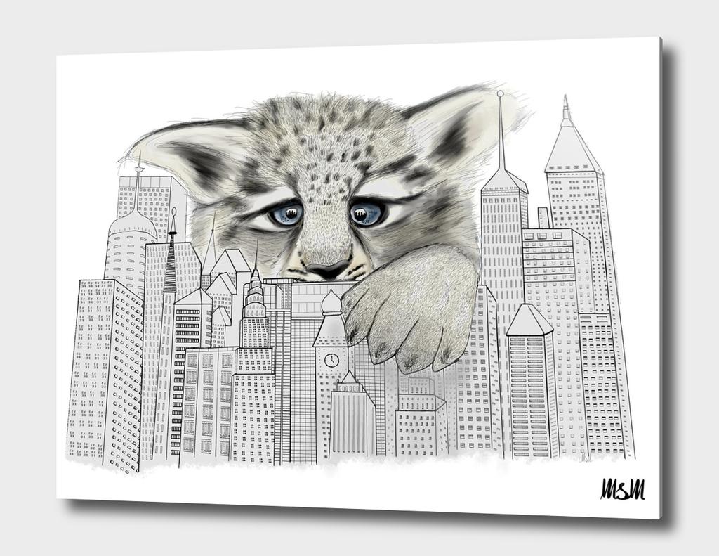 City Leopard