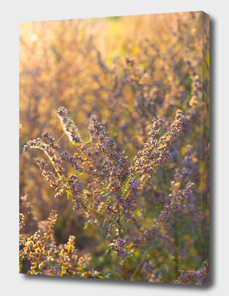Indian summer meadow