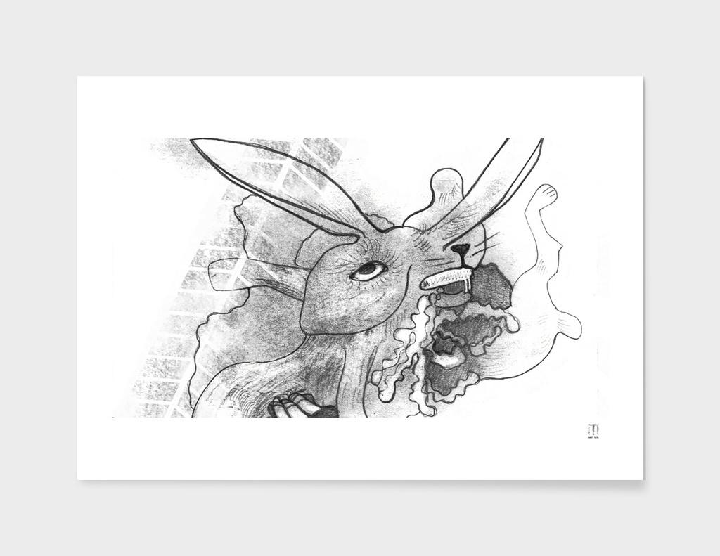 Rabbit on the street