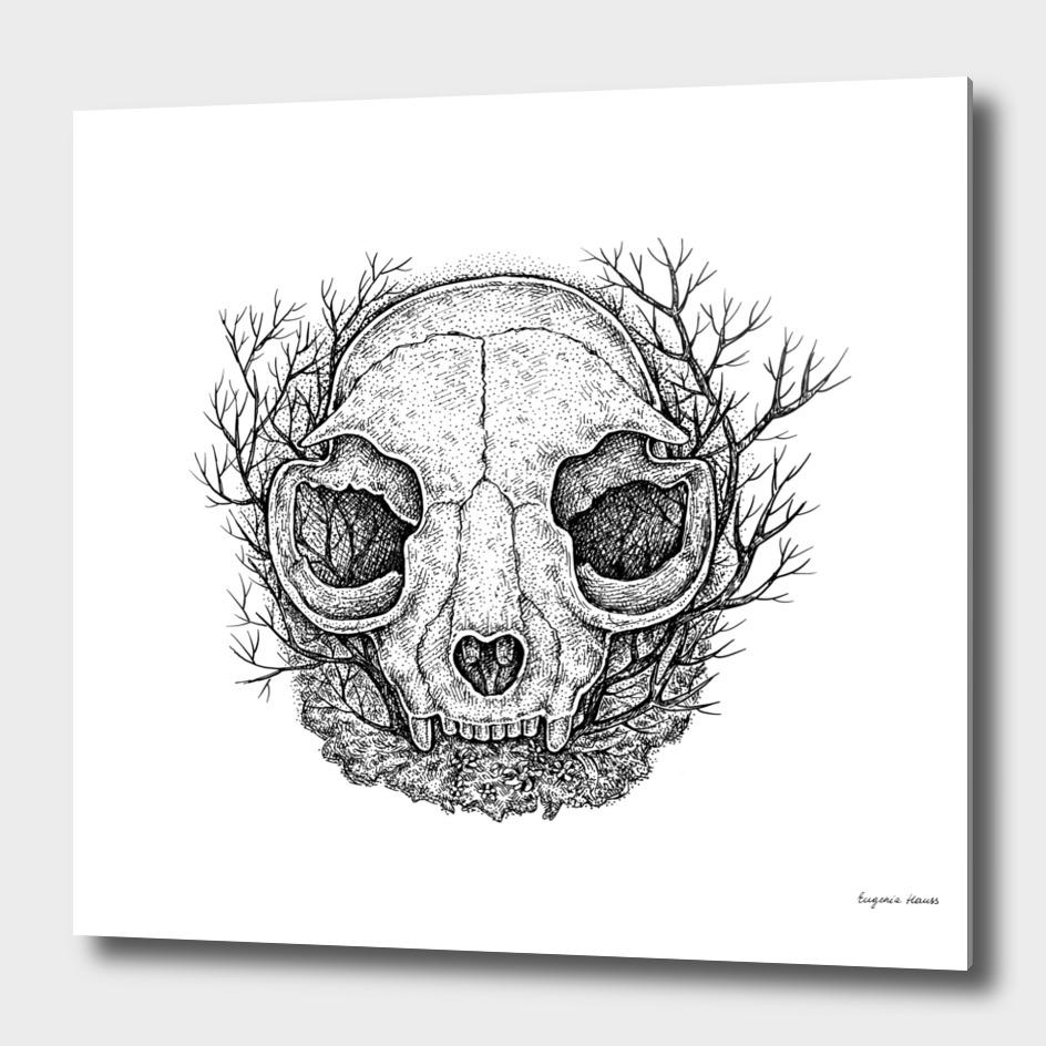 Small Animal Skull