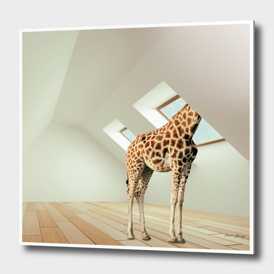 the last giraffe
