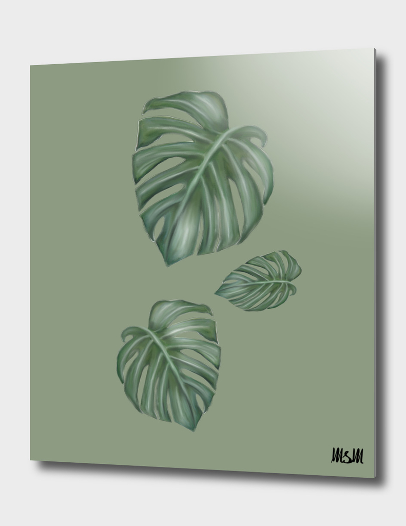 monstera the tree