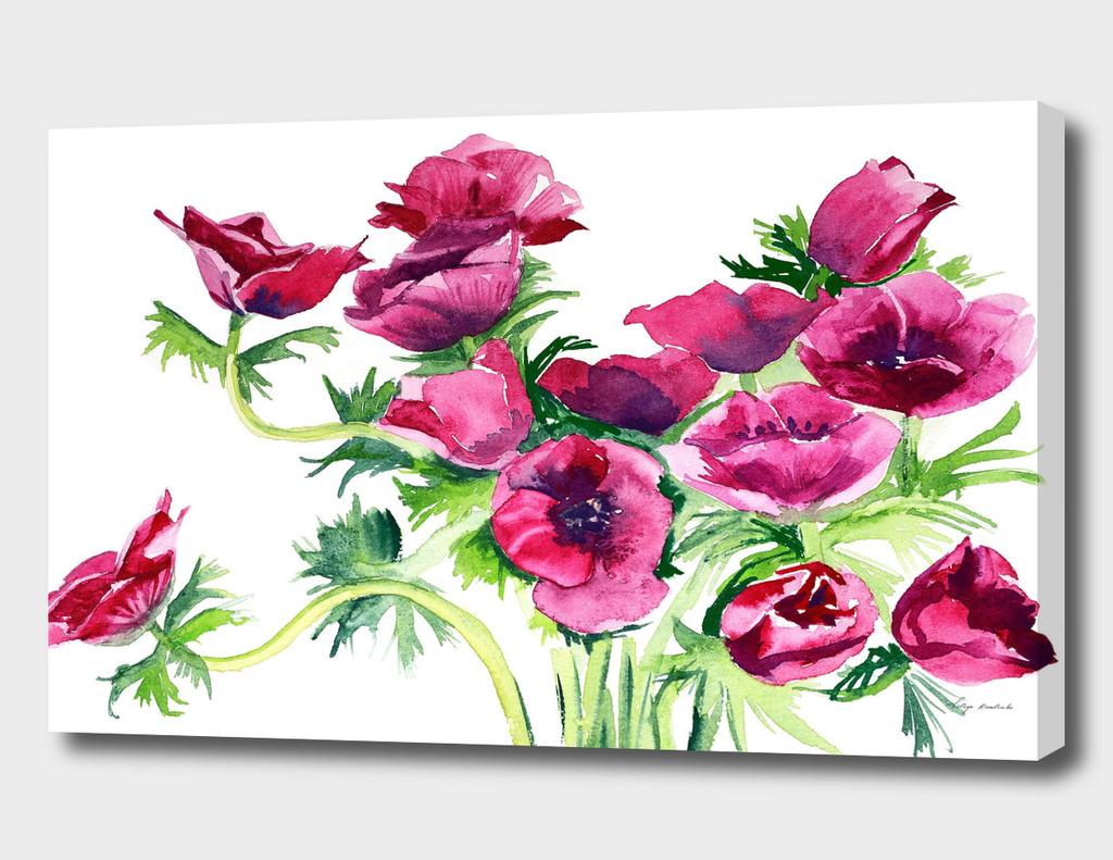 flowers poppies