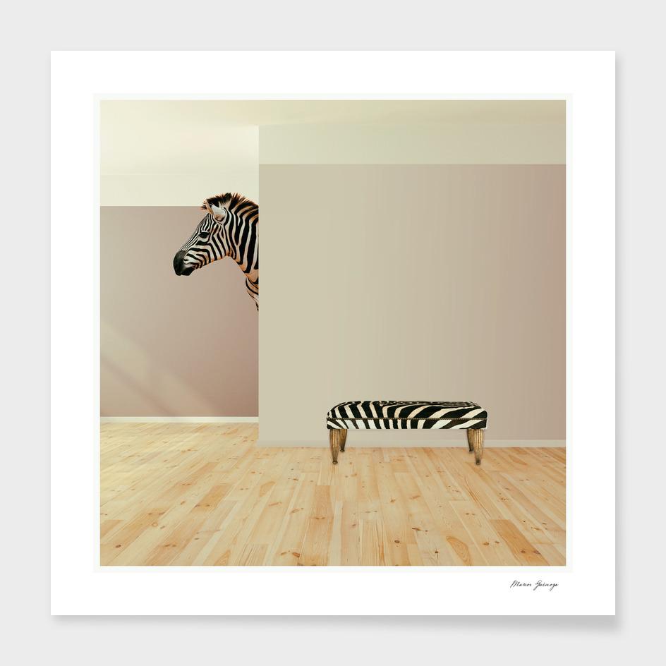 the last zebra