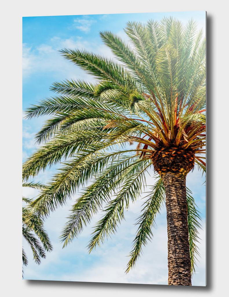 Green Island Palm Tree On Blue Sky