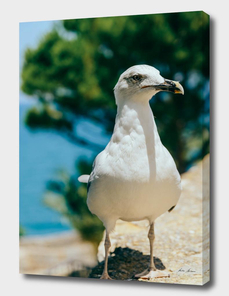 Funny White Seagull Bird Portrait
