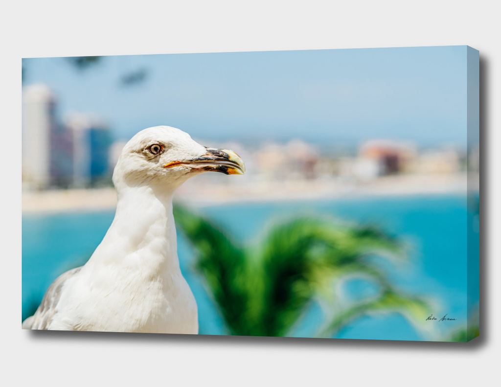 Funny White Seagull Bird Portrait