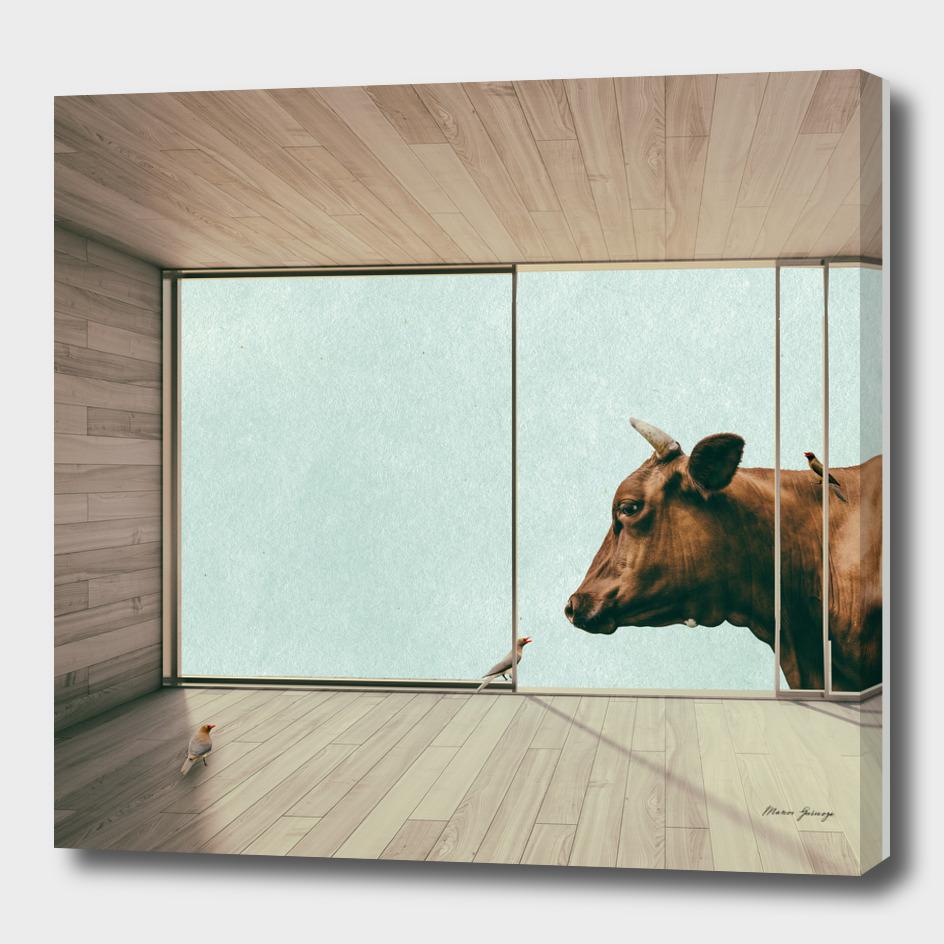 the last bull