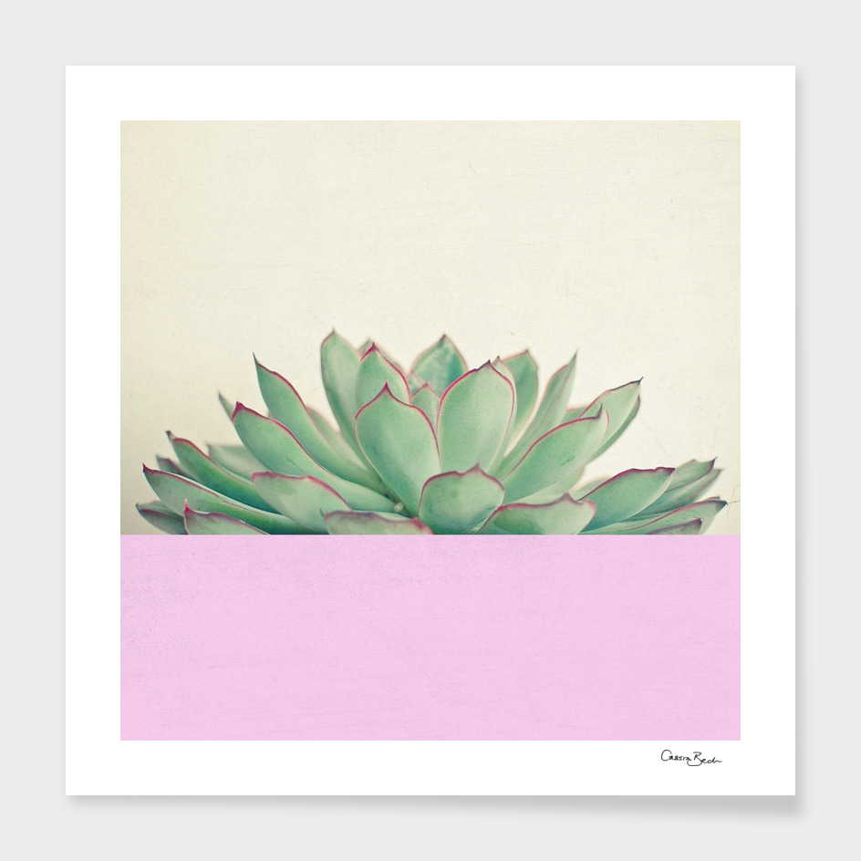 Succulent Dip