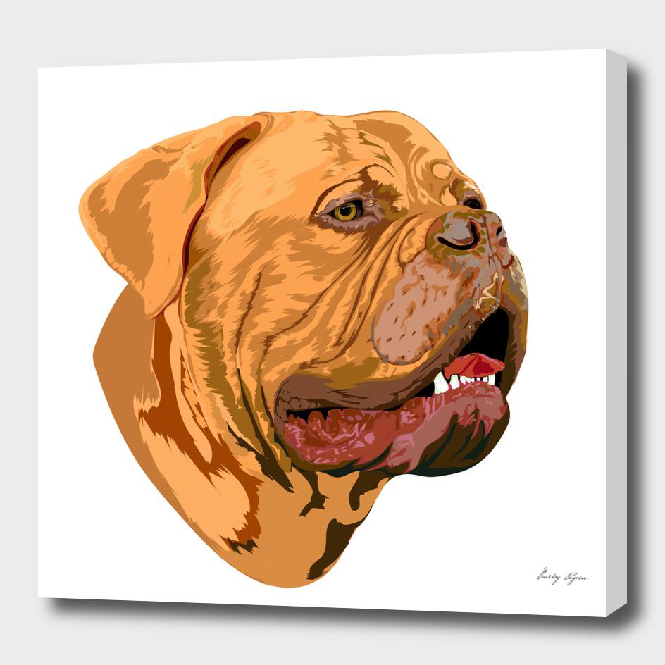 Portrait of a Bordeaux dog