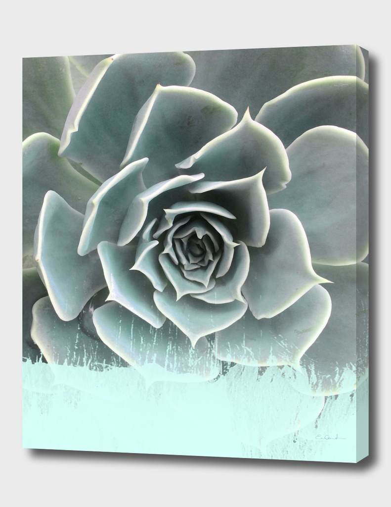 Sweet Teal Paint on Succulent