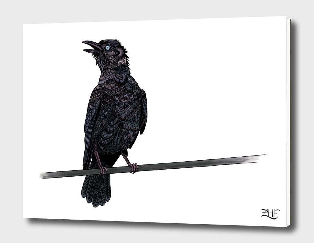 Verklempt Crow