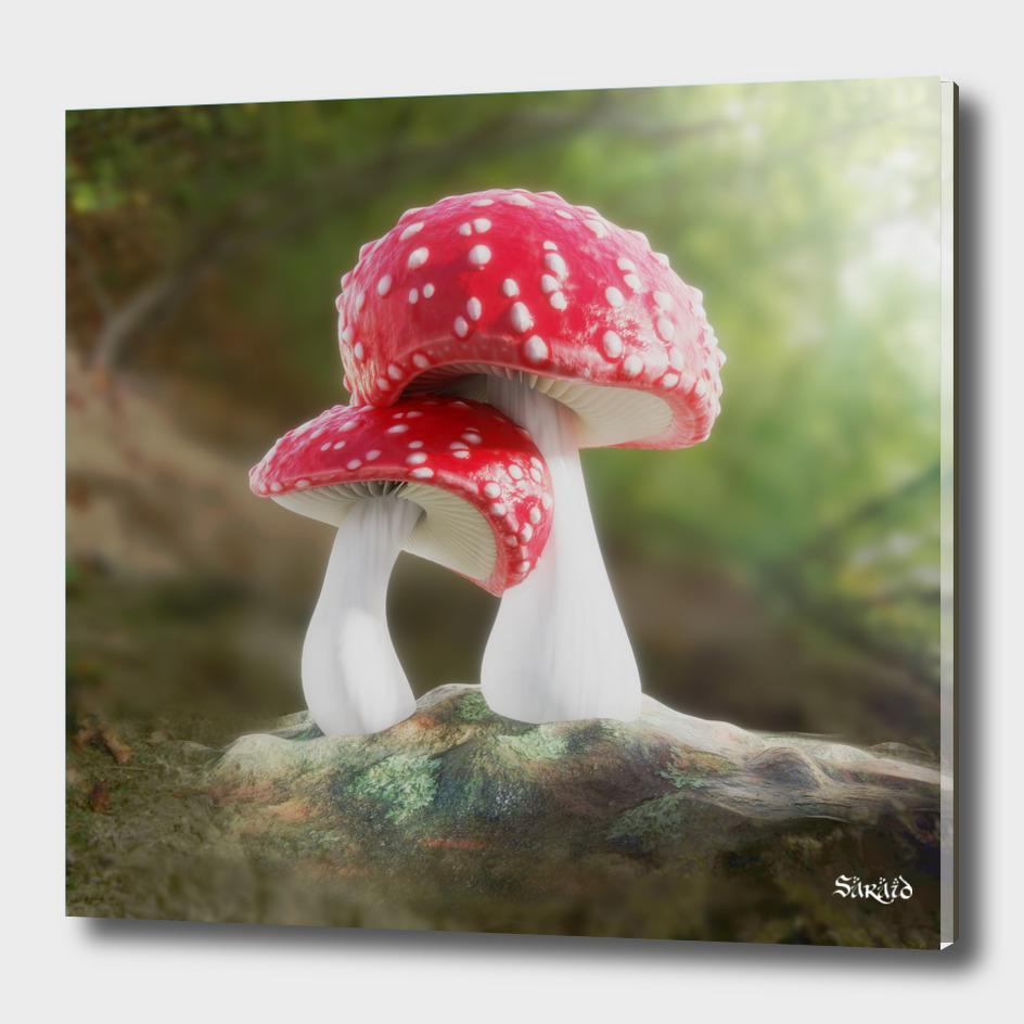 Fairy Mushroom Love