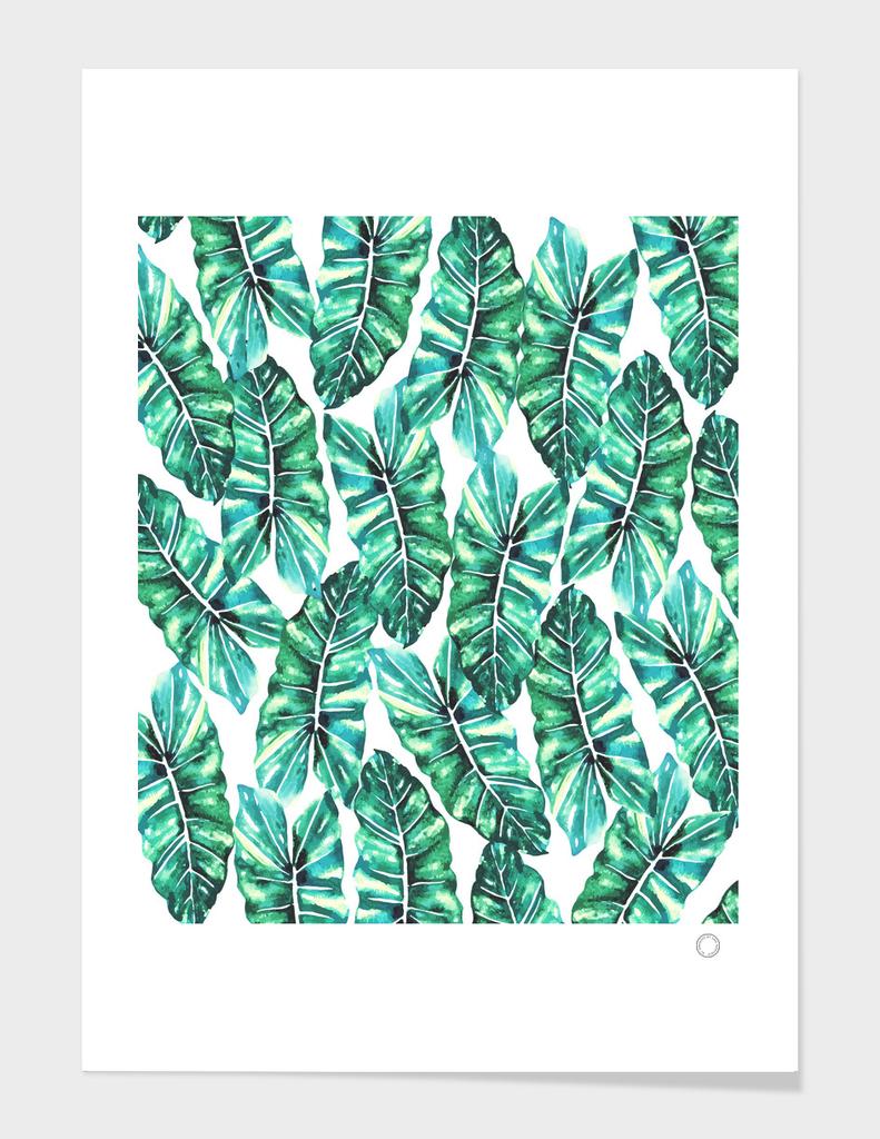 Leafy Wonder