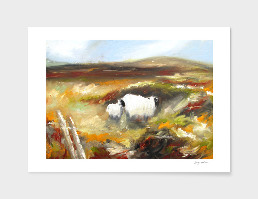 sheep in irish landscape