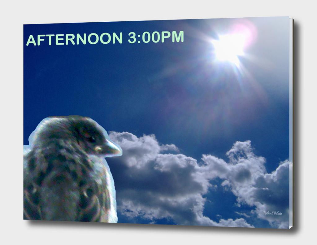 Afternoon.bird.3pm