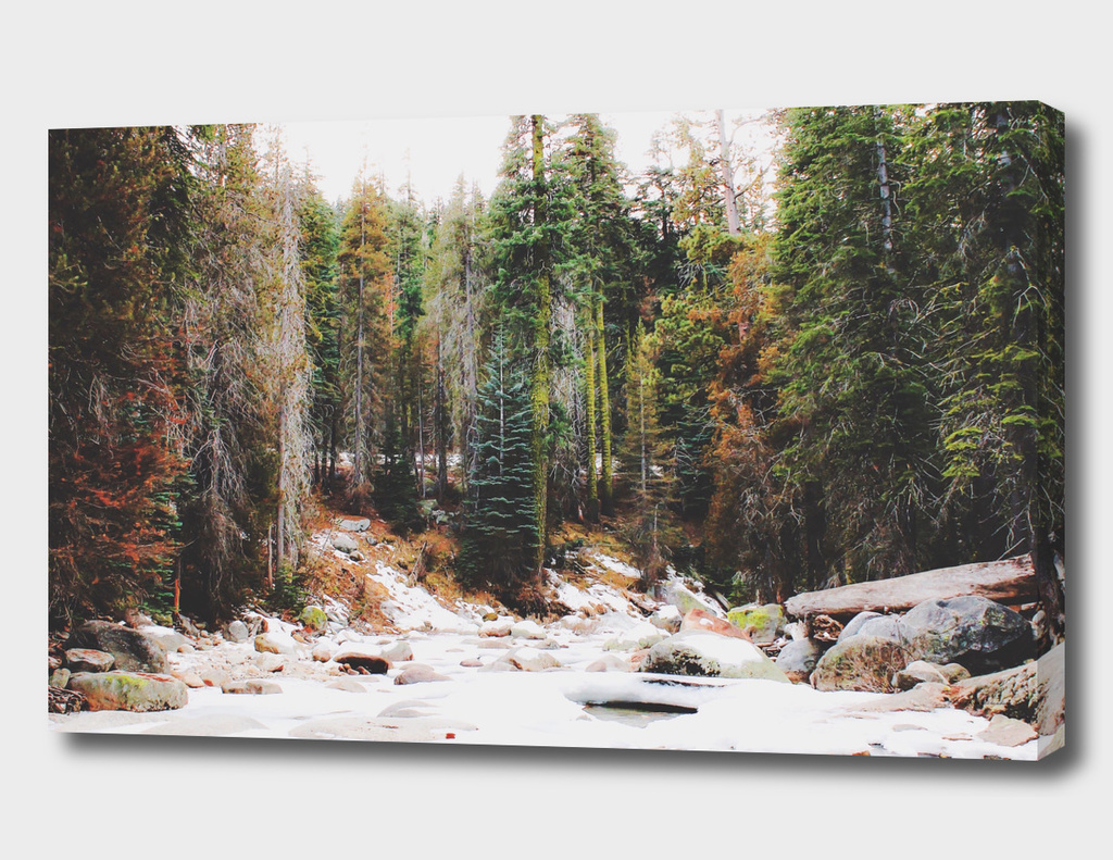 forest in winter with snow at Sequoia national park, USA